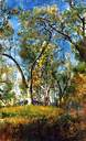 landscape-with-trees-T