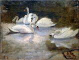 swans-T
